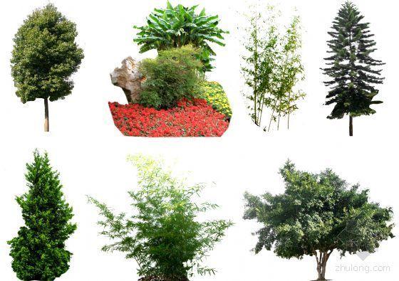 PS后期素材(树木)04