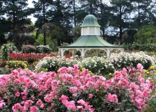 8年时间,他收集了20多国的400万朵玫瑰,送妻子一座最美私家花园