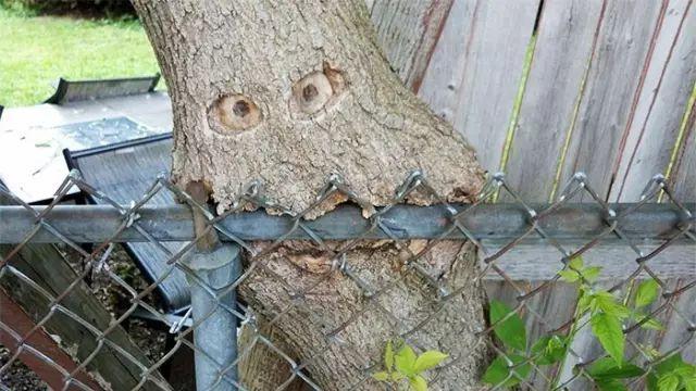 连树都这么拼命,你还有什么理由不奋斗?_15