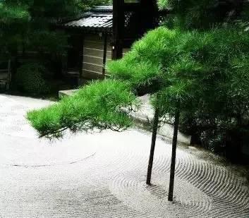 """园林造景,看""""树""""的气场!_7"""