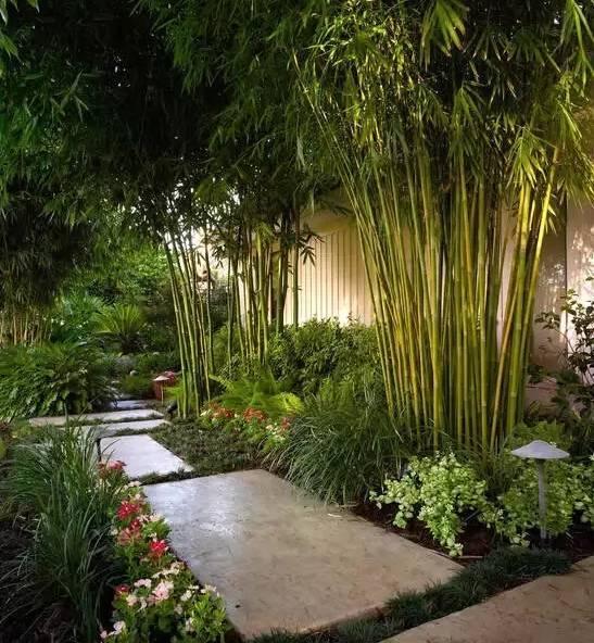 标签: 园林景观 景观实景 竹类植物  26种