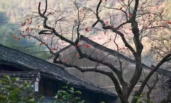 这才是中国人的院子,秋天美到骨子里_22