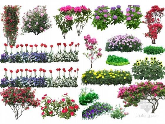 景观植物花径PSD素材