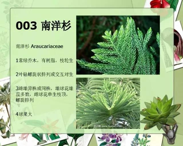 100种常见园林植物图鉴-20160523_183224_005.jpg