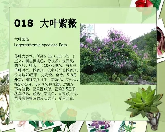 100种常见园林植物图鉴-20160523_183224_022.jpg