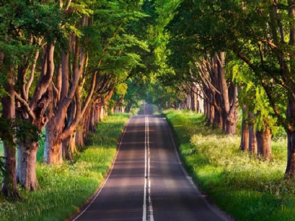道路工程路基施工质量控制应关注的五个问题