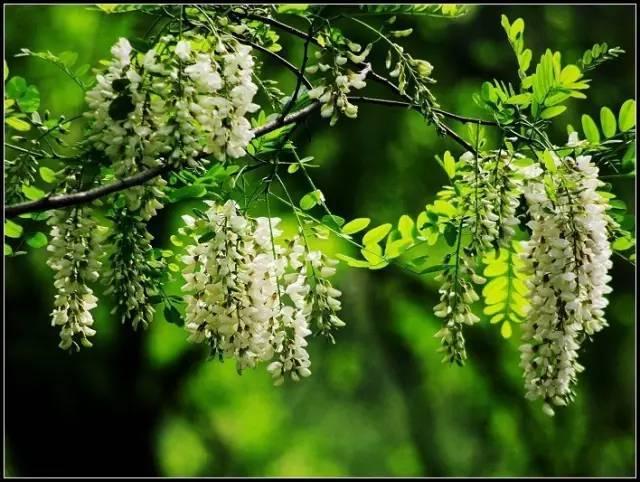 古代民居庭院种树植花讲究多