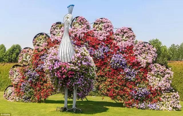 迪拜的花卉展览,全世界规模最大!你肯定没看过!_10