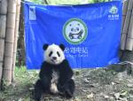 推荐熊猫电站-新能源产业园区