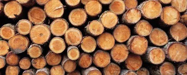 古典园林常用木材解析