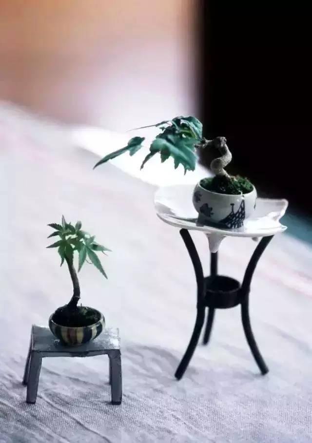 绿植这样摆,你家比园林还要美!_16