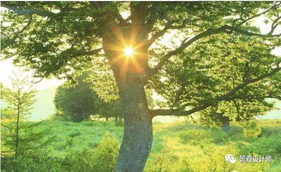 连树都这么拼命,你还有什么理由不奋斗?_2