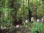 医疗与养老空间中的植物景观设计