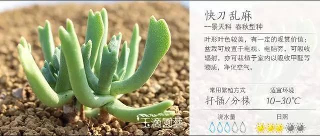 一入肉界深似海,100种常见多肉植物养护宝典_71