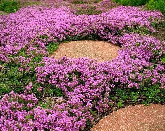 不起眼的小野花,也可以给你的花园带来惊喜_2