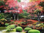 色叶树,为你的景观增光添彩