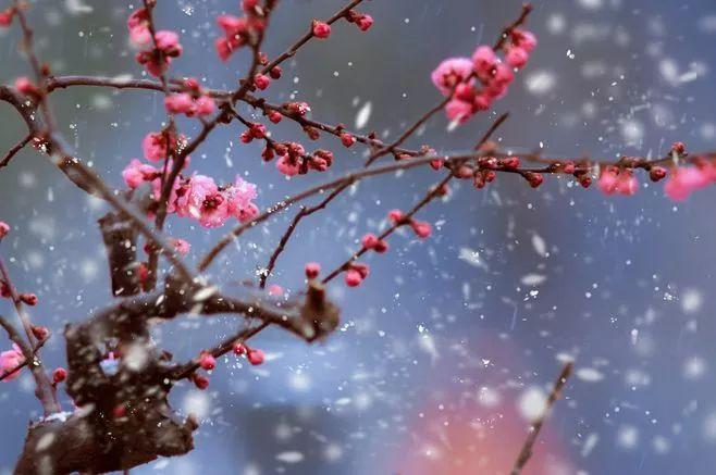 暗香疏影,踏雪寻梅,太美了!_22