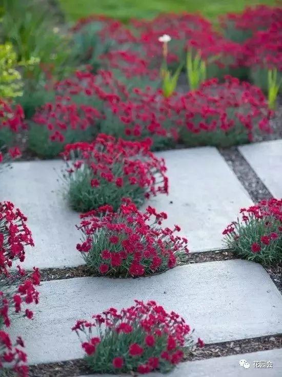 花草与石板的关系•花园小径_7