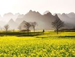 中国最早的春天,花开成海,美若仙境!