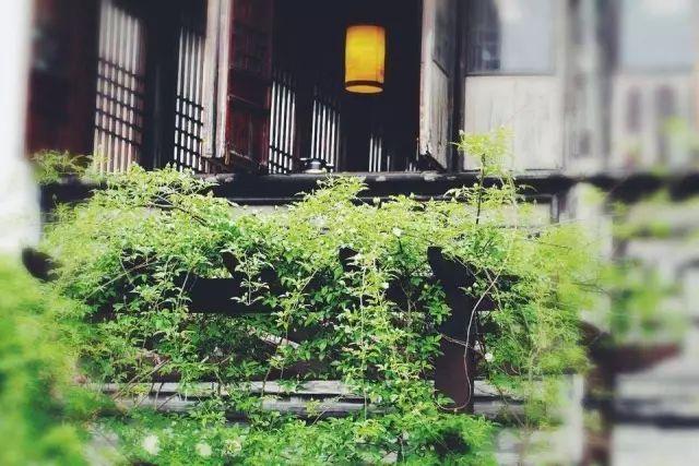 治愈系花园——管它什么伤害,人生总要逆袭