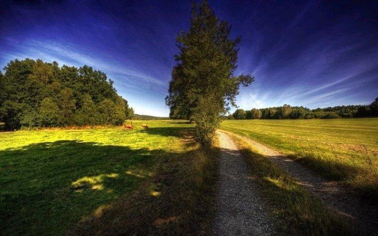 送您一股清新的田园风。_15