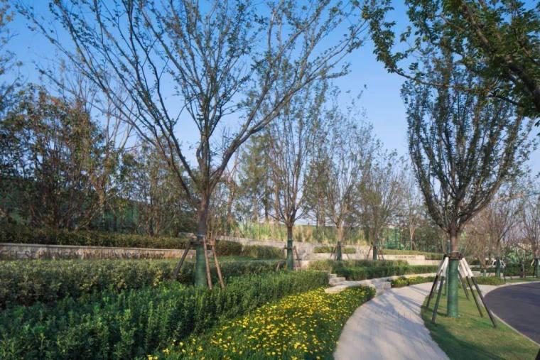 上海万科安亭湖语森林景观-12