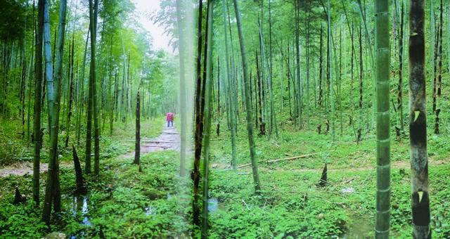 植物景观设计要点分析 ——在医疗与养老空间中的运用