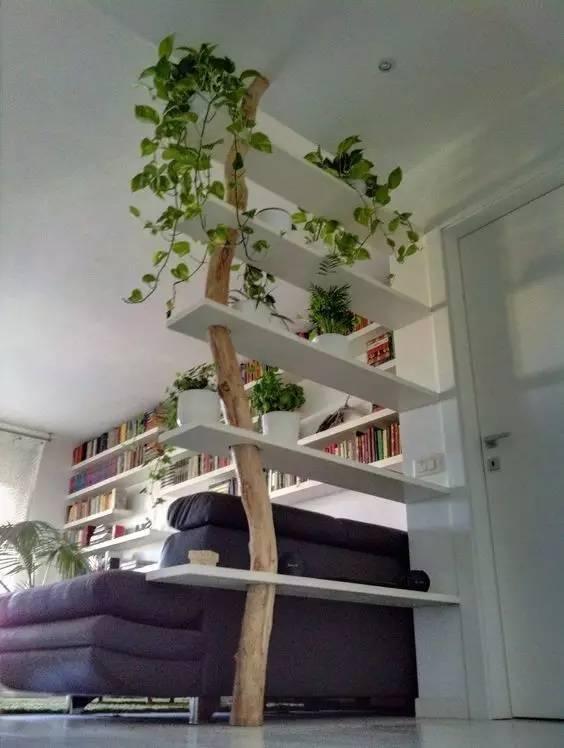 植物才是最美的隔断_15