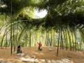 吐故纳新——丽水竹林剧场景观