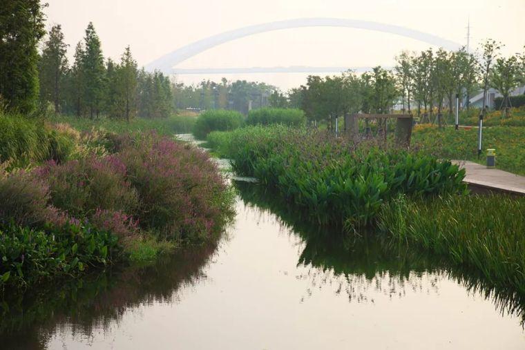 全面推进生态治水,景观设计师能做些什么?_22