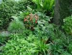 如何让花镜植物在花园中脱颖而出?