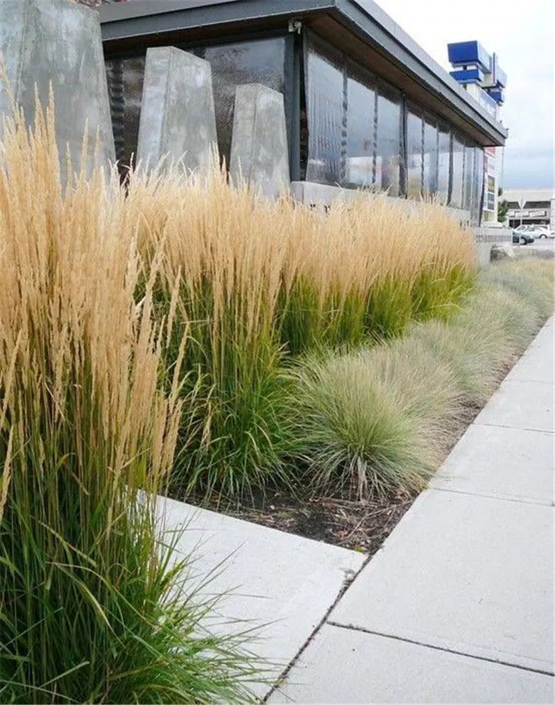 植物造景·实用景观设计来一波_6