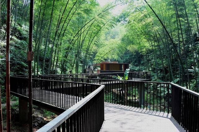 作为室内设计师,竹材料你了解多少?
