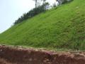 岩石坡面边坡绿化技术分析
