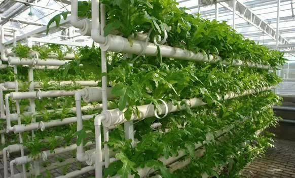 观光农业如何化风景为财富?