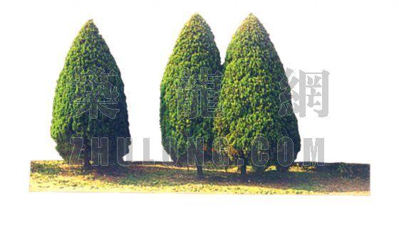 景观各种树贴图(造型)-景观 各种树贴图(造型)