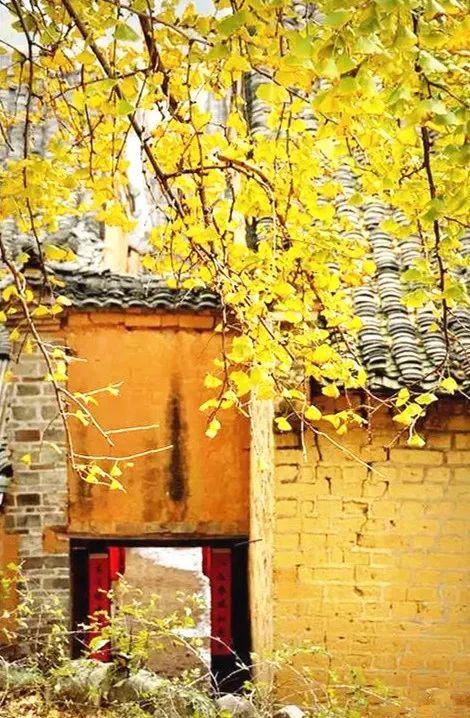 这才是中国人的院子,秋天美到骨子里_27