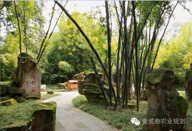 夏日竹韵——浅析竹子在景观设计中的应用_9