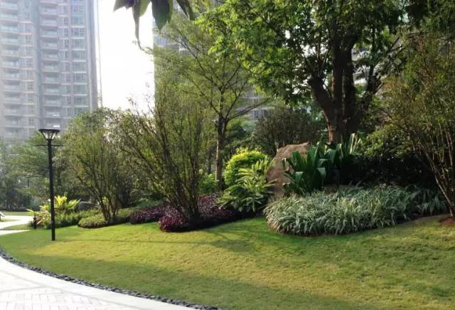 干货 景观地被植物的选择方式_20