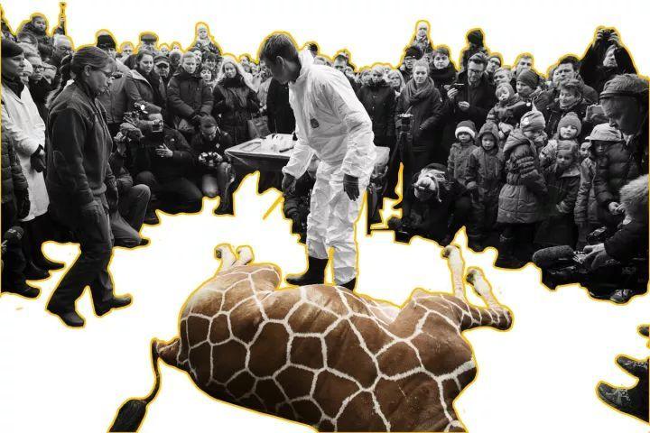 不做动物园设计,你都不知道动物们住得多憋屈
