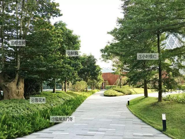 最详细图解:深圳湾三大豪宅景观植物配置!_30