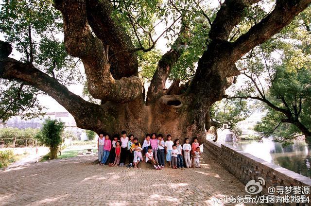 中国十大古树名木鉴赏!