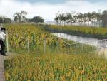 [湖南]绿色低碳田园新城复合生态城市景观设计方案