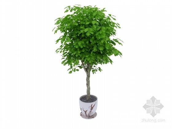 茂密小树3D模型下载