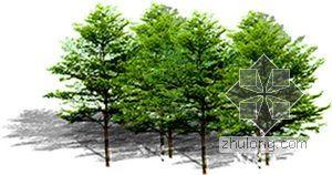 后期植物素材--树丛02