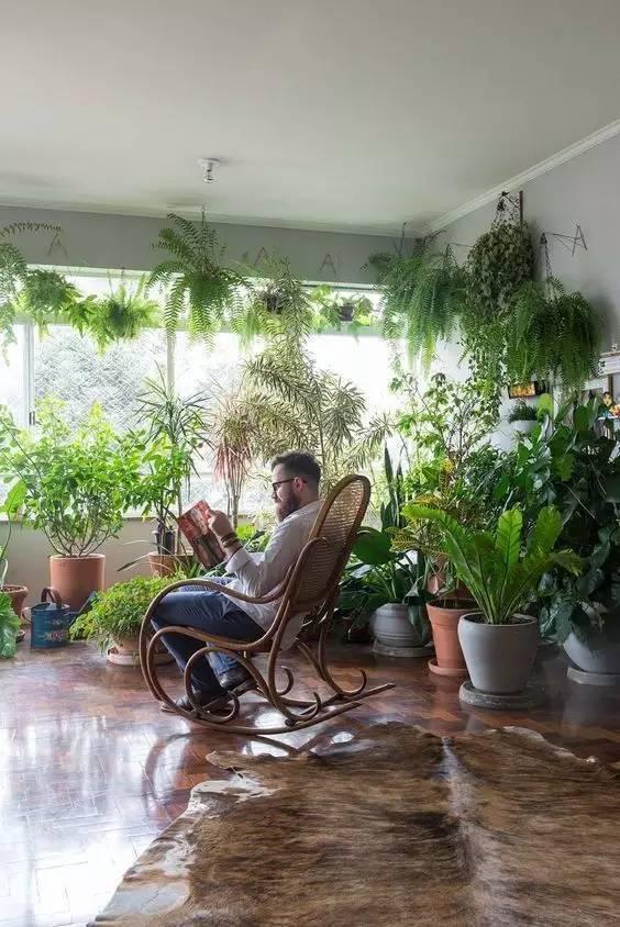 植物才是最美的隔断_12