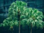 绿色施工实施规划方案