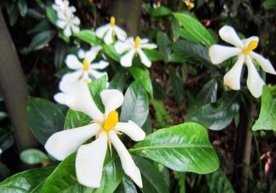香花植物-嗅觉盛宴_12