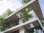 住宅里探出的绿色精灵:胡志明市植物住宅