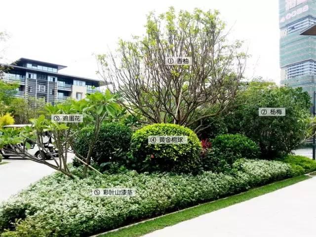 最详细图解:深圳湾三大豪宅景观植物配置!_7